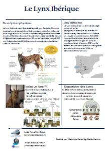 Poster lynx ibérique